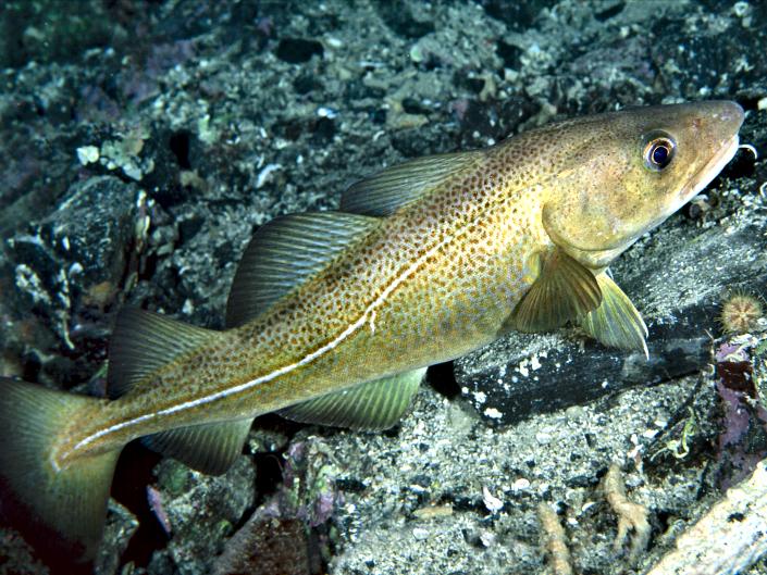 Skyddade havsområden på spel